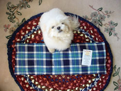 You will love this heating pad as much as your dog