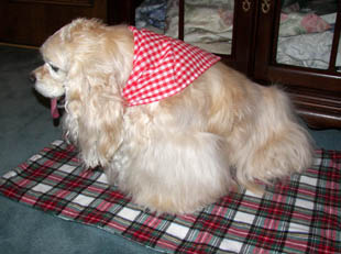 Red gingham dog scarf